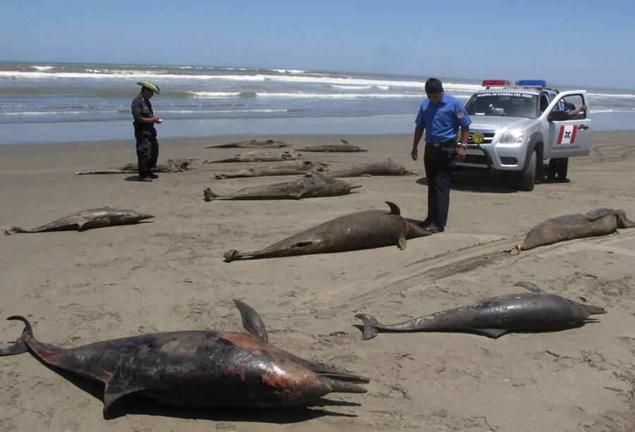 Полный текст фото погибших морских млекопитающих сайте: