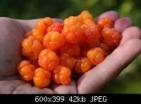 Нажмите на изображение для увеличения.  Название:sea_092.JPG Просмотров:5 Размер:41.7 Кб ID:2145