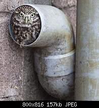 Нажмите на изображение для увеличения.  Название:owls47.jpg Просмотров:11 Размер:156.9 Кб ID:1067