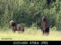 Нажмите на изображение для увеличения.  Название:Медведи.jpg Просмотров:44 Размер:476.0 Кб ID:4780