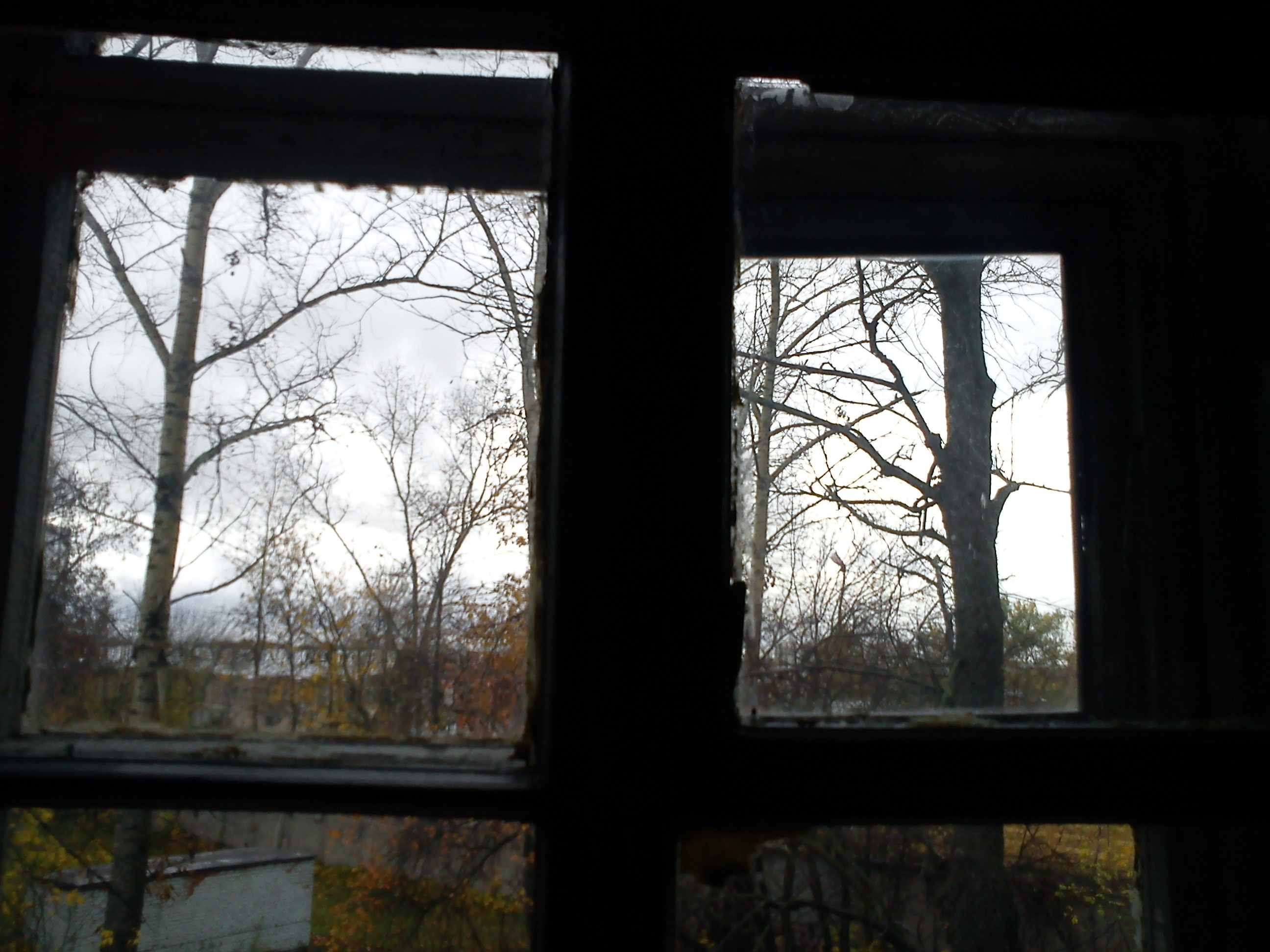 У соседки в окне 17 фотография
